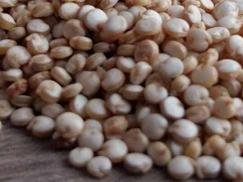 Quinoa Koken